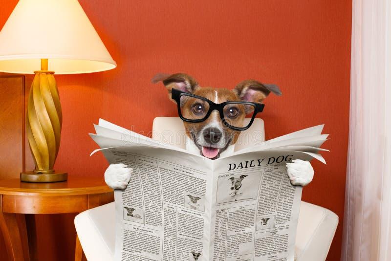 De krant van de hondlezing thuis royalty-vrije stock afbeelding