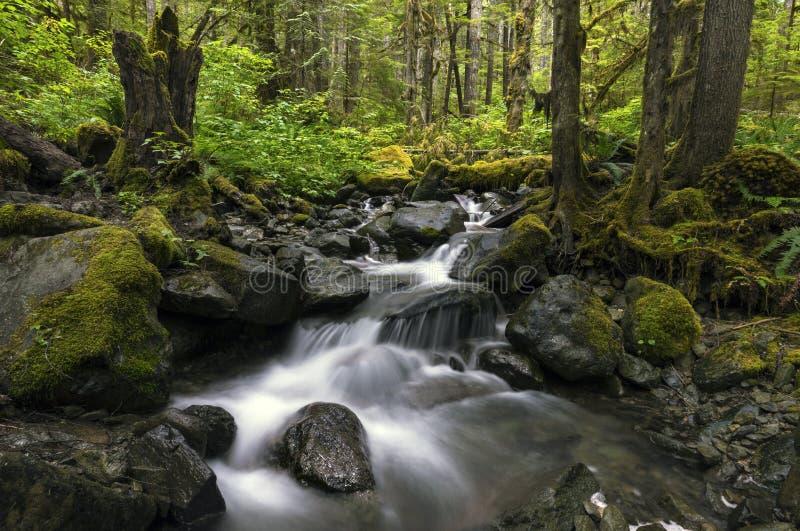De Kreek van regenforest pacific north west waterfall stock afbeelding