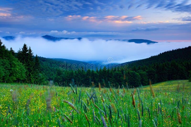 De Krkonoseberg, bloeide weide in de lente, de bosheuvels, de nevelige ochtend met mist en de mooie wolken, piek van Snezka-heuve royalty-vrije stock afbeeldingen