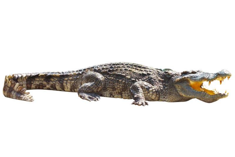 De krokodil zonnebaadt royalty-vrije stock fotografie