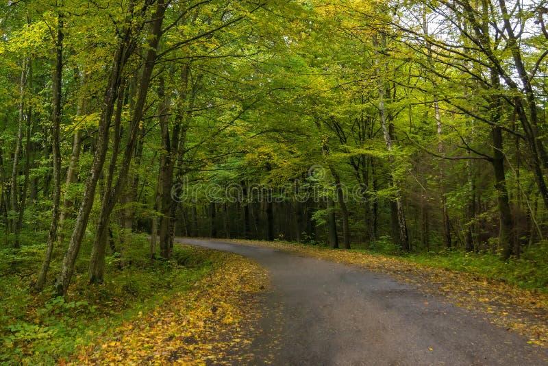 De kromming in de weg in het bos stock fotografie