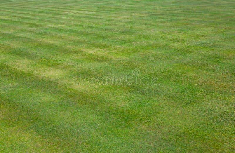 De kroon werpt groen grasgazon stock afbeeldingen