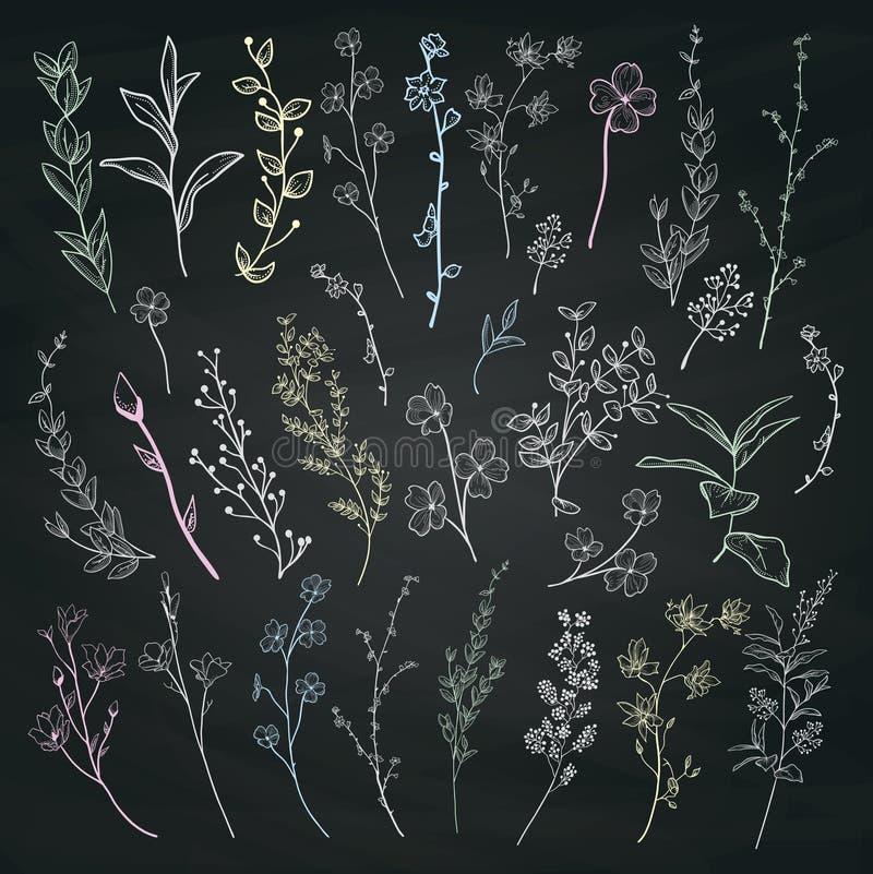 De Kruiden, de Installaties en de Bloemen van de krijttekening Vector illustratie stock illustratie