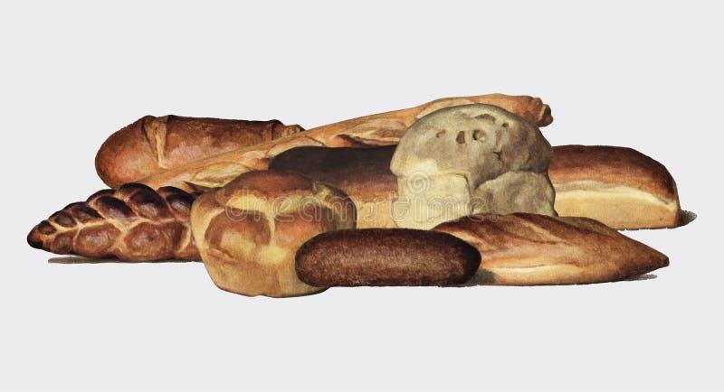 De Kruideniers` s Encyclopedie 1911, een uitstekende inzameling van diverse types van gebakken broodbroden Digitaal verbeterd doo vector illustratie