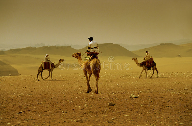 De kruising van de kameel stock fotografie