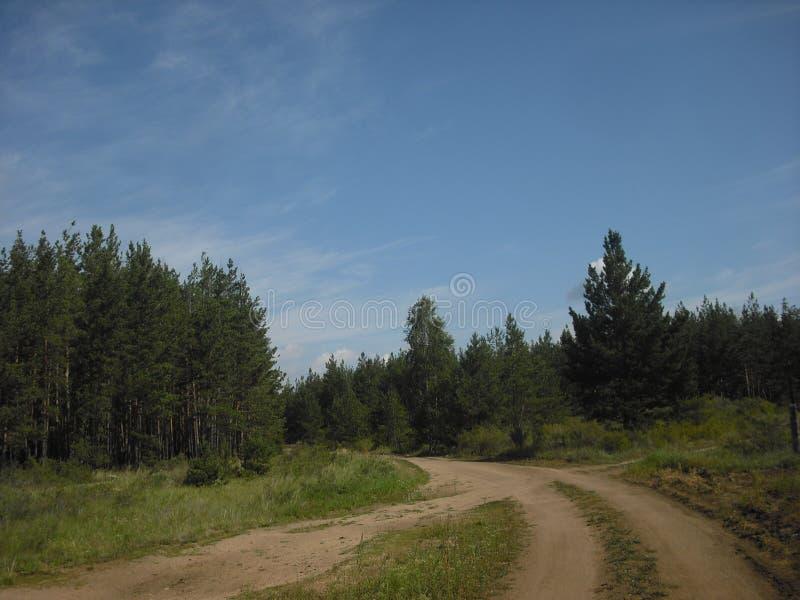 De kruispunten in het bos stock afbeeldingen