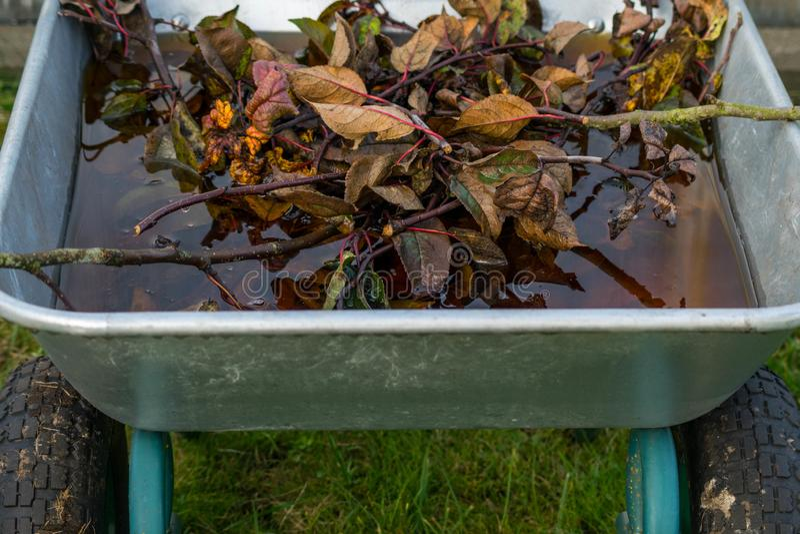 De kruiwagen is volledig van de oranje herfst doorbladert royalty-vrije stock fotografie