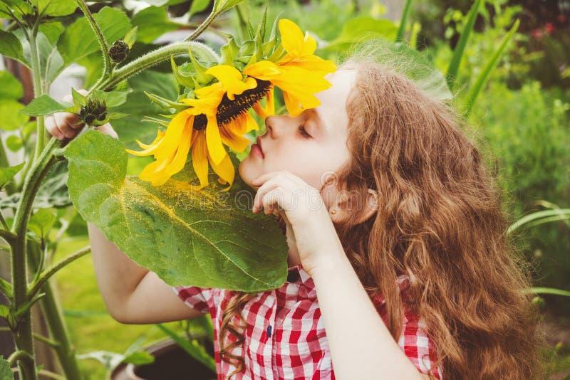 De krullende zonnebloem die van de meisjesgeur van aard in de zomer zonnige dag genieten stock fotografie