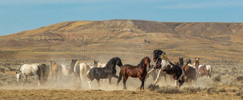 De Kudde van het wild paard royalty-vrije stock foto's