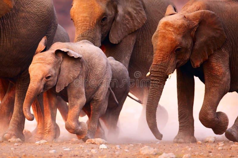 De kudde van olifanten het lopen royalty-vrije stock afbeelding