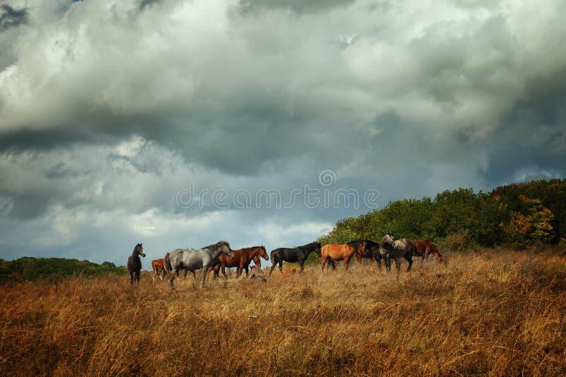 De kudde van paarden stock fotografie