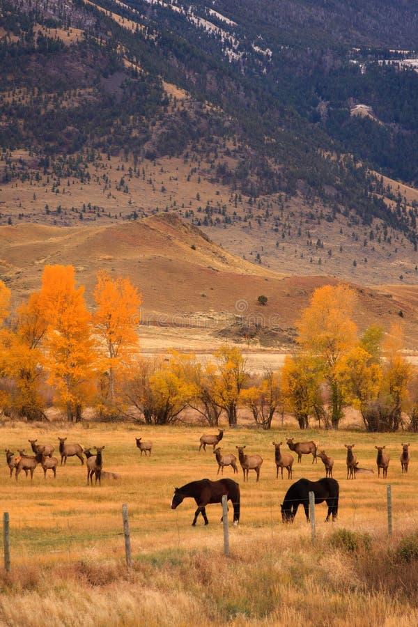 De Kudde van paarden en van Elanden royalty-vrije stock foto