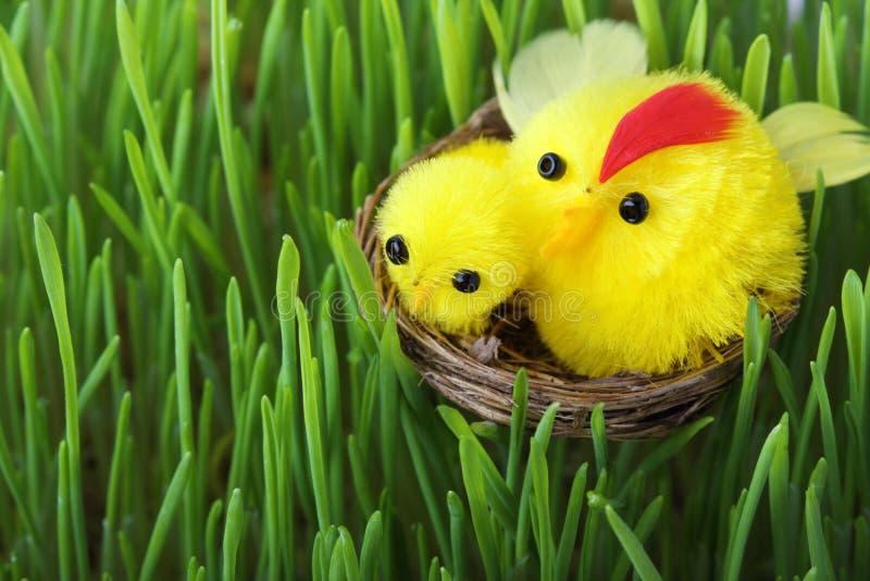 De kuikens van Pasen in het gras royalty-vrije stock afbeeldingen