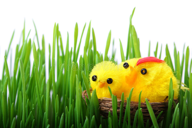 De kuikens van Pasen in het gras stock fotografie