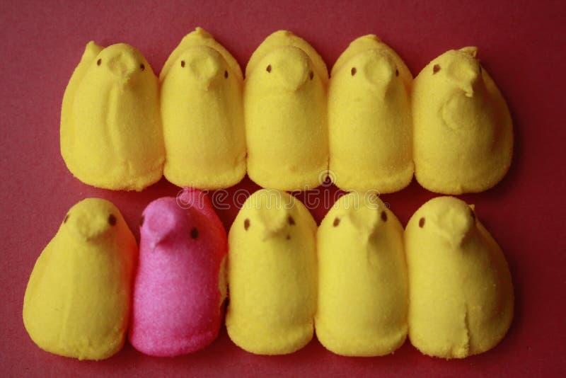 De kuikens van piepgeluiden één roze in een rij van geel stock foto