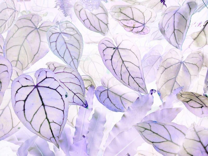 De kunst van de negatieve bladeren van Anthuriumcrystallinum royalty-vrije stock foto