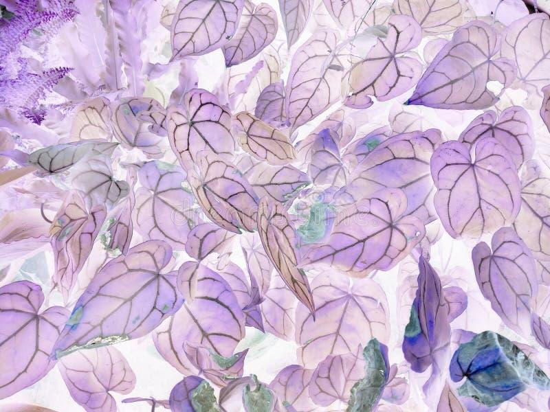 De kunst van de negatieve bladeren van Anthuriumcrystallinum stock afbeeldingen