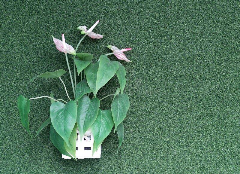 De kunstmatige bloem van sierplanten roze spadix met groene bladeren in het houten ingemaakte hangen op kunstmatige groene grasmu stock fotografie