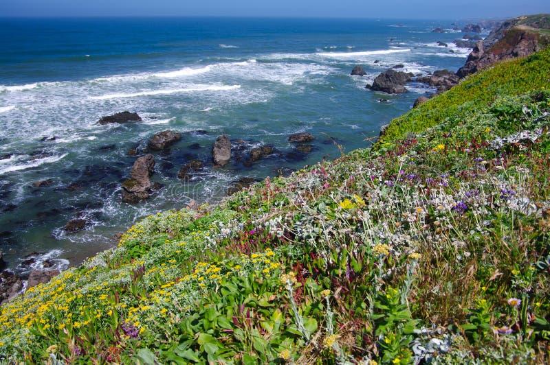 De Kust van Californië in Juni stock afbeeldingen