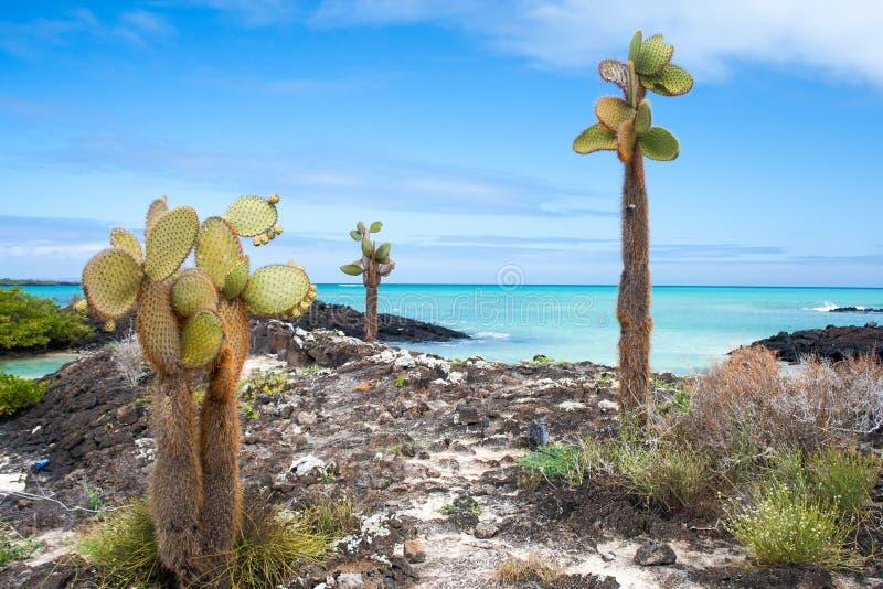 De kust van de Galapagos stock foto's