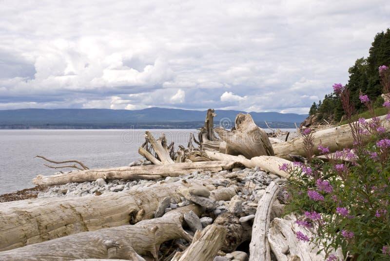 De kust van de rivier met drijfhout stock afbeelding