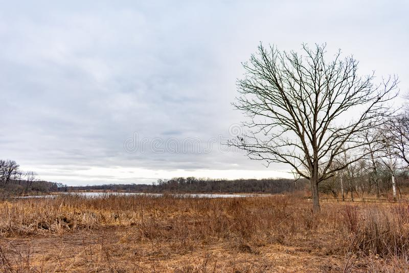 De Kust van een Vijver in Forest Preserve tijdens de Winter in Willow Springs Illinois In de voorsteden royalty-vrije stock afbeeldingen