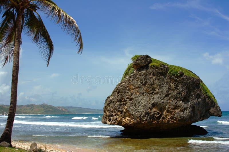 De kust van het oosten van Barbados stock afbeelding