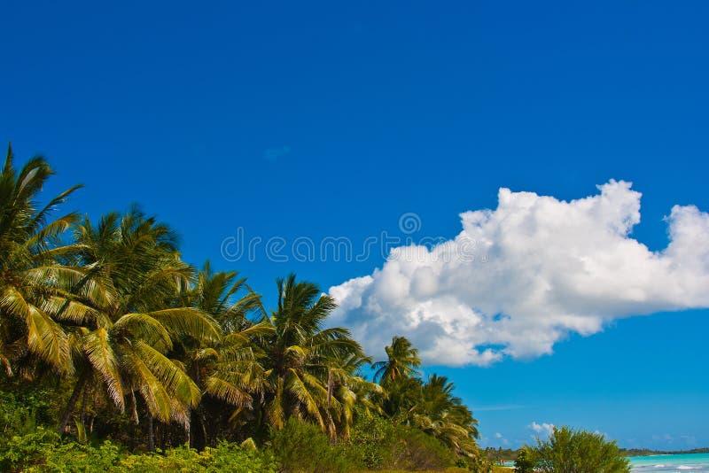 De kust van het tropische overzees stock afbeeldingen