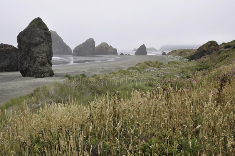 De kust van Oregon met wilde grassen en mist stock afbeeldingen
