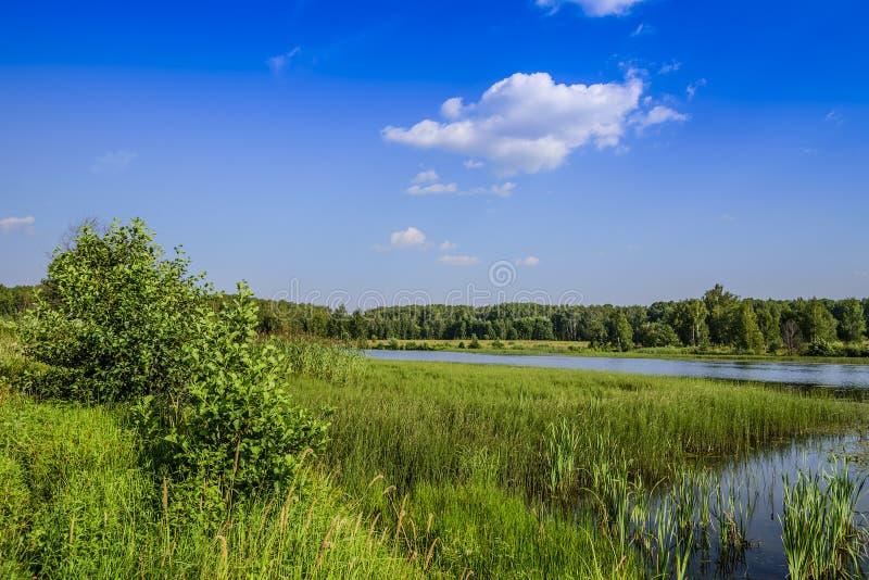 De kusten van een groot bosdiemeer met gras, riet en bos op een heldere zonnige dag wordt overwoekerd royalty-vrije stock afbeelding