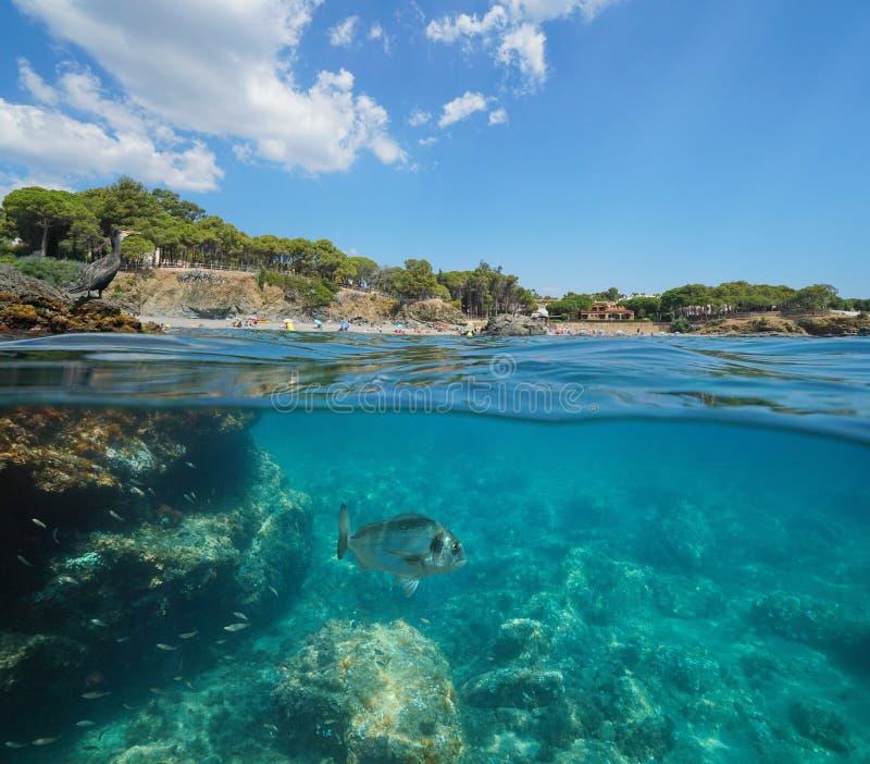 De kustlijnaalscholver van Spanje op rotsvissen onderwater royalty-vrije stock fotografie