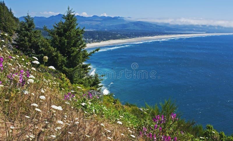 De kustpanorama van Oregon met wildflowers royalty-vrije stock foto's