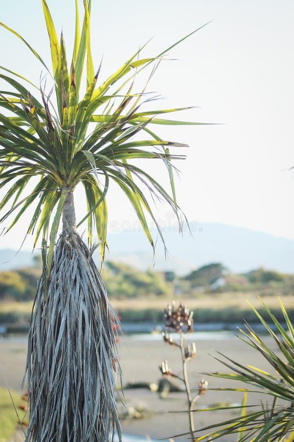 De Kustscène van Nieuw Zeeland met een inheemse Koolpalm en een vlasstruik royalty-vrije stock afbeelding