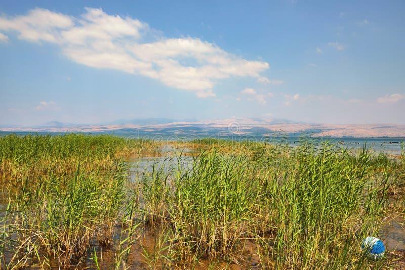 De kuststrook van het Kinneretmeer met struiken Juli royalty-vrije stock foto's