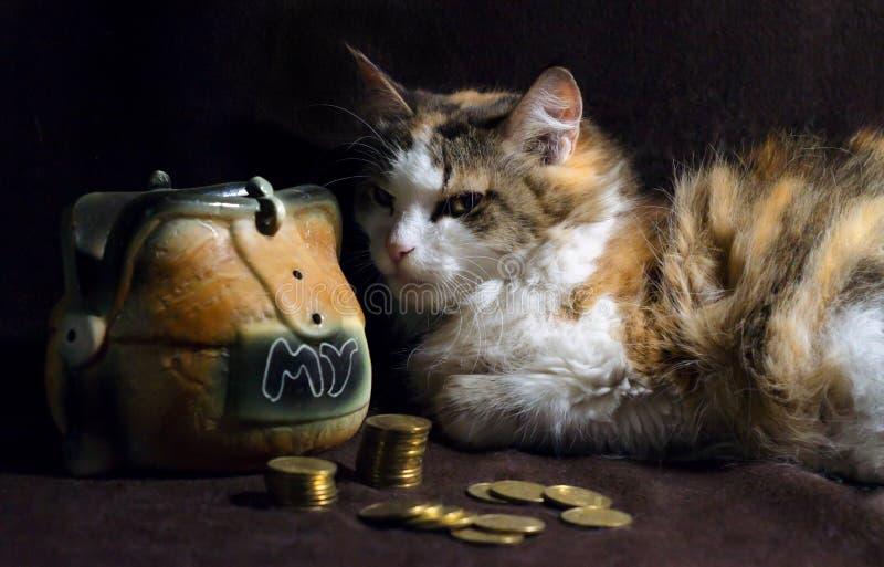 De kwade kat op een donkere bruine achtergrond zit naast het spaarvarken royalty-vrije stock afbeelding