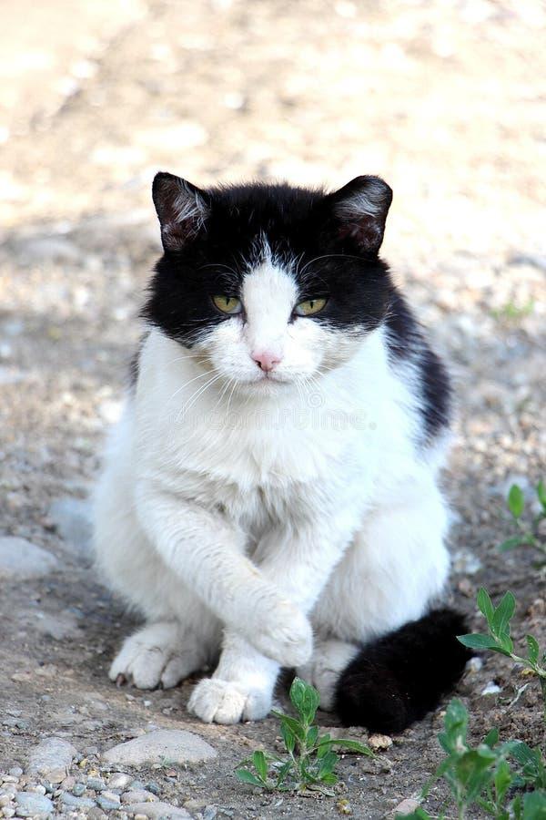De kwade kat vond iets uit zit stock afbeelding