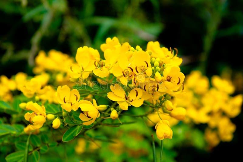 De lösa blommorna i blom är satte en klocka på och härliga royaltyfria bilder