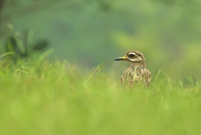 De l'herbe photographie stock libre de droits