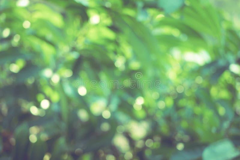 De la falta de definición abstracta del color verde para e del fondo, borroso y defocused fotografía de archivo