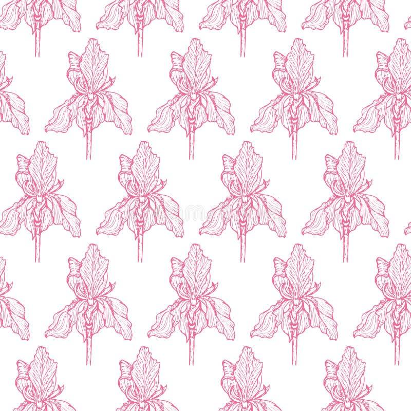 De la flor del iris del modelo ajedrez rosado suavemente ilustración del vector