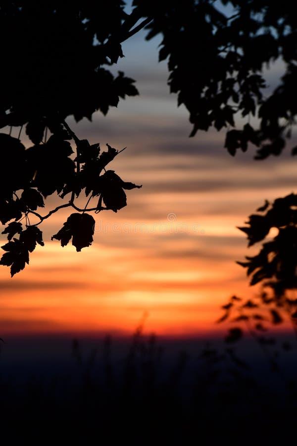 De la puesta del sol árboles sin embargo en las colinas de Chiltern fotos de archivo libres de regalías