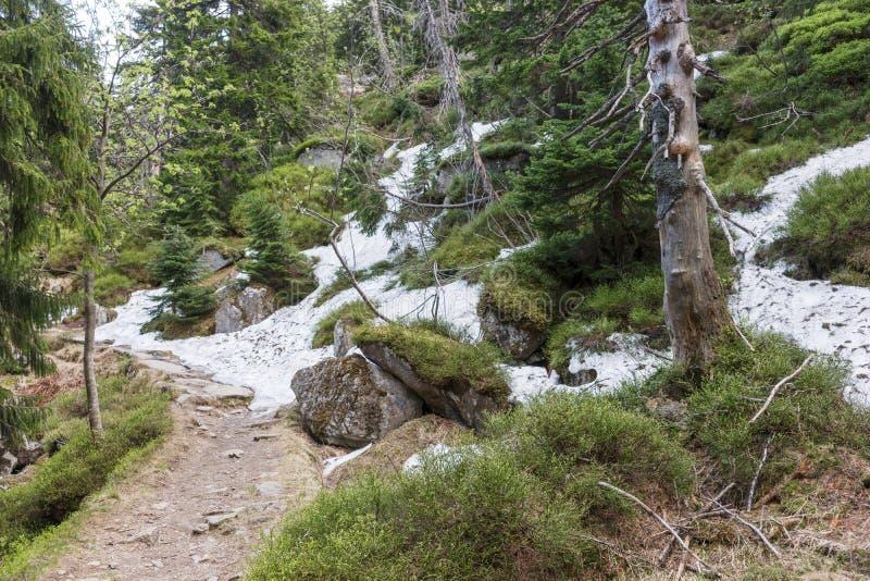 De laatste sneeuw in het bos royalty-vrije stock foto's