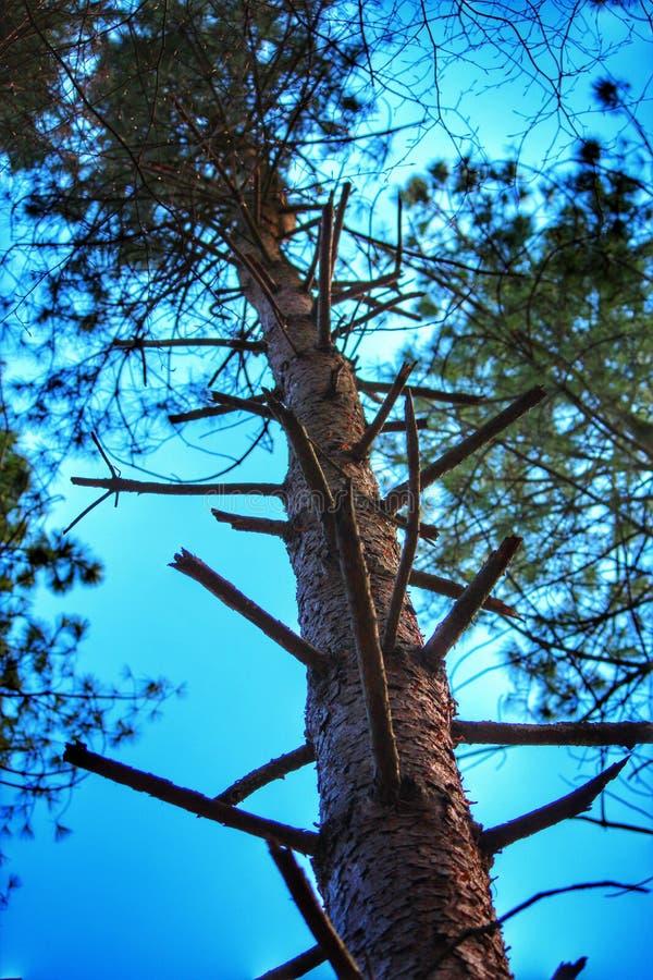 De Ladder van de boomtak stock afbeelding