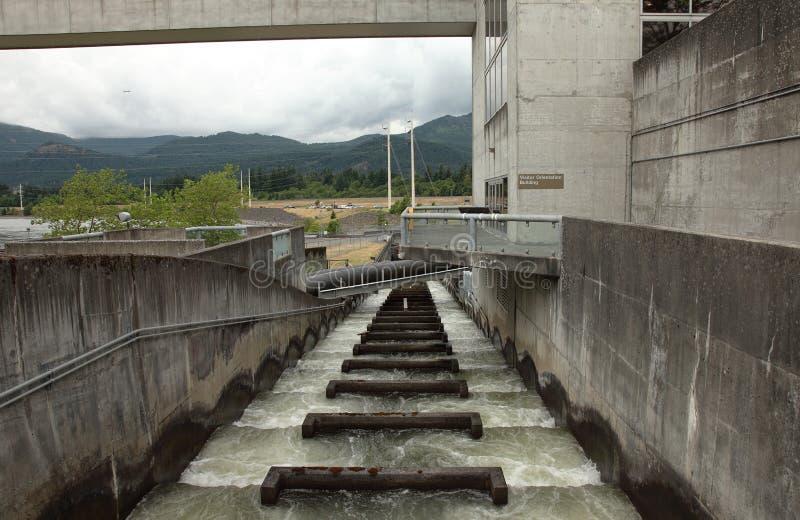 De ladders van vissen, Bonneville Oregon. royalty-vrije stock fotografie