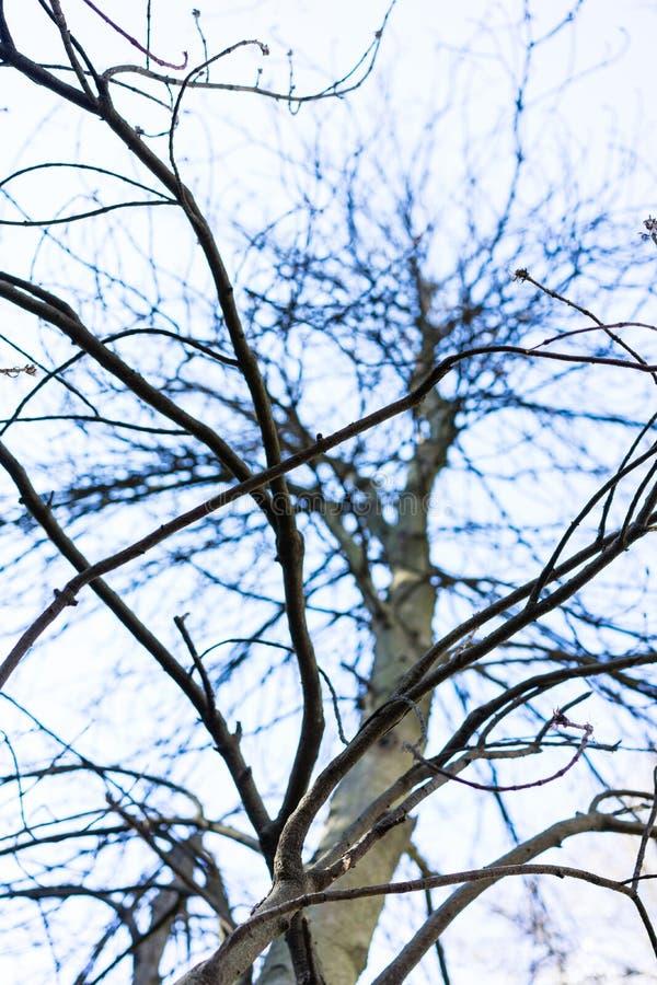 De lage hoekmening van takken van Fagus-sylvaticaboom, riep algemeen Europese beuk royalty-vrije stock foto's