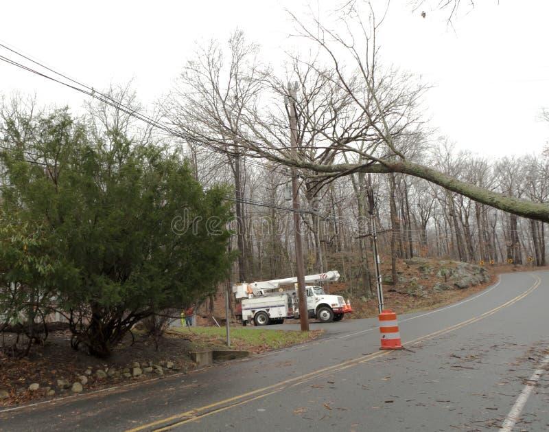 De lage Zandige Orkaan van de boom stock foto's