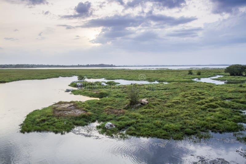 De lagunelandschap van de Arugambaai, Sri Lanka stock afbeelding
