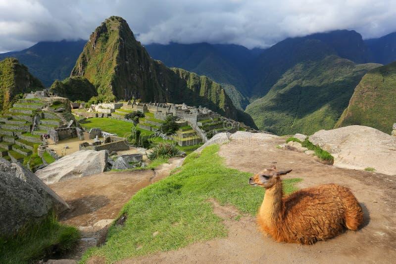 De lama die in Machu Picchu rusten overziet in Peru royalty-vrije stock foto's