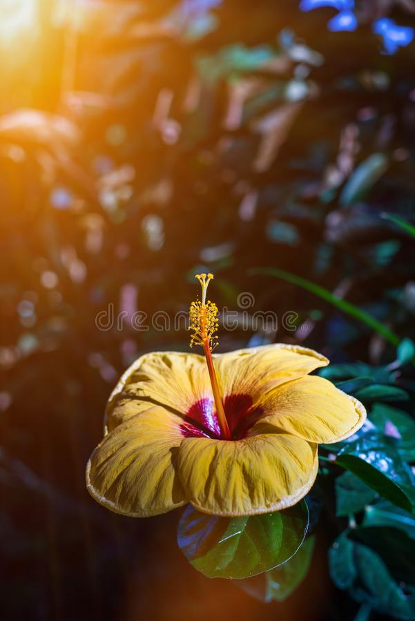 De lamp die op plafond van Thaise Traditioneel op Tempel hangen royalty-vrije stock fotografie
