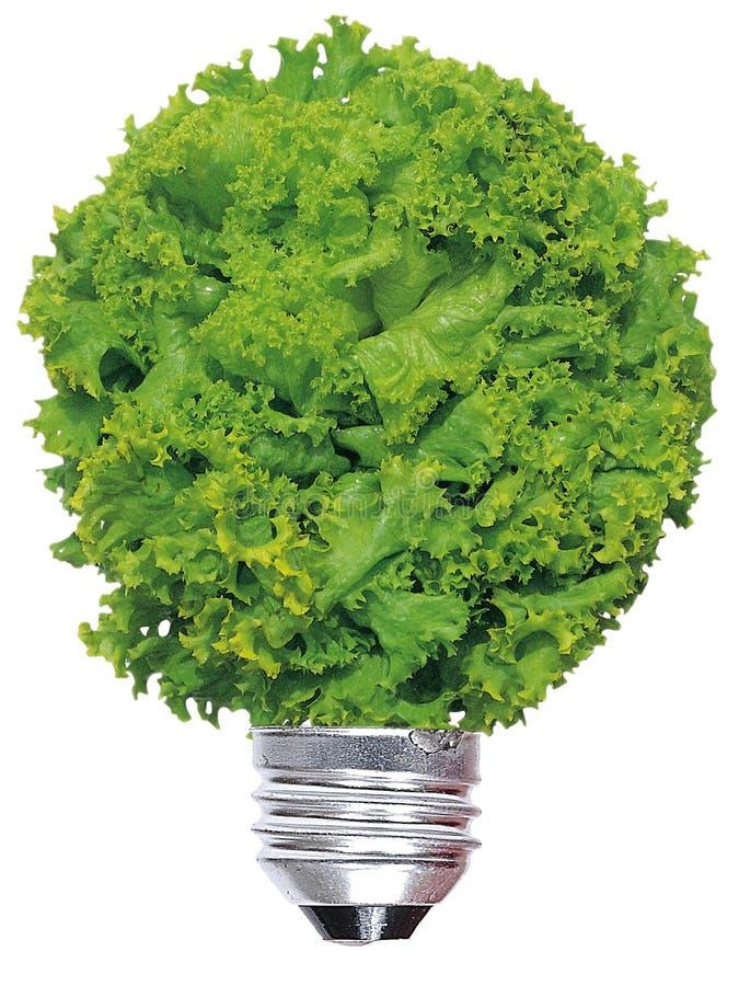 De lamp van de ecologie stock foto